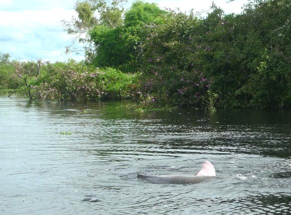 Momentary dolphin sighting