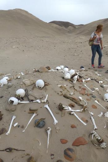 Pile of bones!