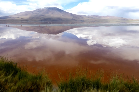Laguna Colorada - showing off it's famous red hues