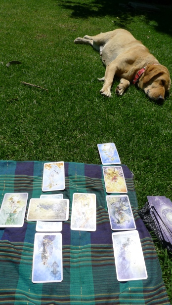 Lazy sunny days with lazy dogs, doing tarot card readings on the grass